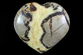 Septarian - Fossils For Sale - #82035