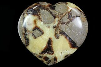 Septarian - Fossils For Sale - #82038