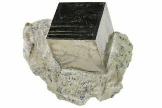 Pyrite - Fossils For Sale - #82068