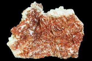 "3.8"" Ruby Red Vanadinite Crystals on Pink Barite - Morocco For Sale, #82385"