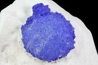 Azurite - Fossils For Sale - #82668