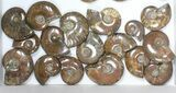 "Wholesale: 1kg Iridescent, Red Flash Ammonites (1-2.5"") - 36 Pieces - #82493-2"