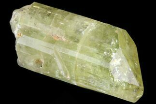 "1.1"" Lustrous Yellow Apatite Crystal - Morocco For Sale, #82547"