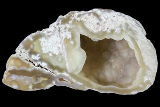 "3.4"" Agatized Fossil Coral Geode - Florida For Sale, #82994"