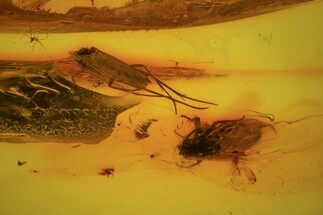 Buy Two Fossil Flies (Diptera) In Baltic Amber - #84607