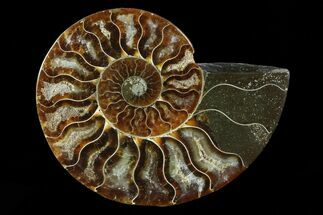 "Buy 3.5"" Agatized Ammonite Fossil (Half) - Madagascar - #83860"