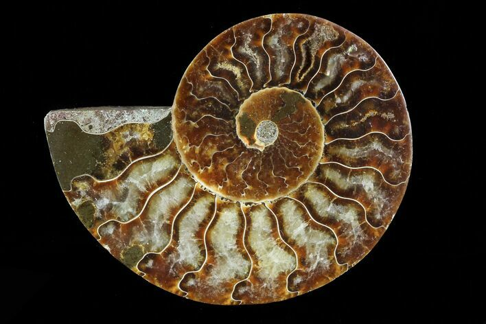 "3.4"" Agatized Ammonite Fossil (Half) - Madagascar"