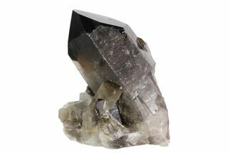 "Buy 4"" Dark Smoky Quartz Crystal Cluster - Brazil - #84856"