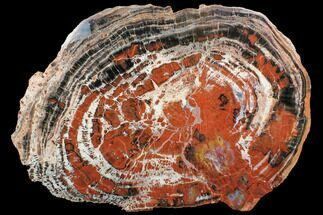 "Massive, Red/Black Arizona Petrified Wood Slab - 20.1"" For Sale, #85964"