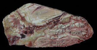 "Buy 5.9"" Polished Brecciated Pink Opal - Western Australia - #65584"