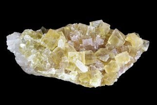 "Buy 2.7"" Lustrous Yellow Cubic Fluorite Crystal Cluster - Morocco  - #84304"