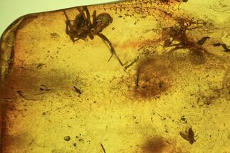 Fossil Fly (Diptera) & Spider (Aranea) In Baltic Amber For Sale, #87242