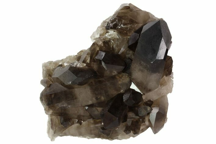 "4"" Dark Smoky Quartz Crystal Cluster - Brazil"