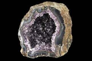 "Buy 7.1"" Purple Amethyst Geode - Uruguay - #87493"