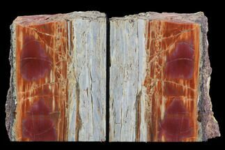 "5.5"" Tall, Arizona Petrified Wood Bookends - Red & Purple For Sale, #87593"