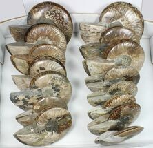 "Wholesale: 4 - 6"" Cut Ammonite Pairs (Grade B/C) - 15 Pairs For Sale, #85220"