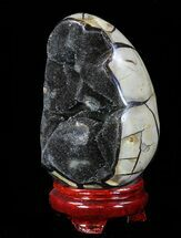 "5.5"" Septarian ""Dragon Egg"" Geode - Crystal Filled For Sale, #88289"