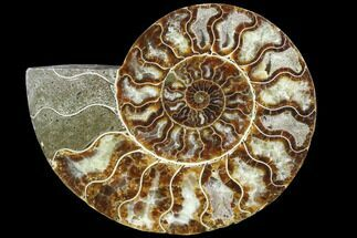 "6"" Agatized Ammonite Fossil (Half) - Crystal Chambers For Sale, #88457"