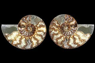 "Buy 5.1"" Cut & Polished Ammonite Fossil - Agatized - #88420"