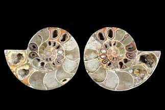 "Buy 4.15"" Cut & Polished Ammonite (Anapuzosia?) Pair - Madagascar - #88006"