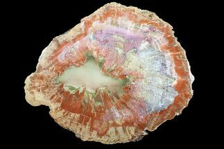 "18.1"" Pastel Colored, Arizona Petrified Wood Round - Agate Core For Sale, #89336"