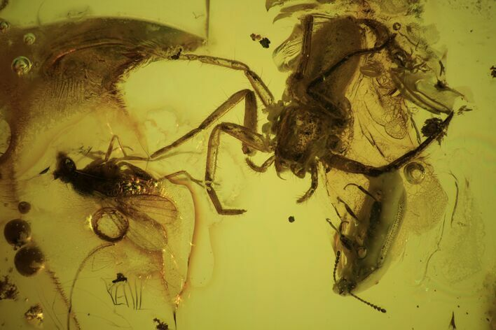 Detailed Fossil Flies, Spider And Beetle In Baltic Amber