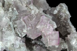 "Buy 5.7"" Pink/Purple Fluorite Crystals on Druzy Quartz - Mexico - #90982"