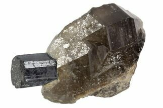"Buy 1.9"" Black Tourmaline (Schorl) & Smoky Quartz - Namibia - #90706"
