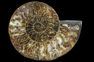 Cleoniceras - Fossils For Sale - #91173