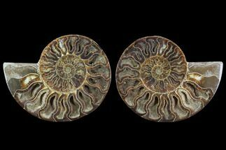 "Buy 5.7"" Cut & Polished Ammonite Fossil - Crystal Chambers - #91150"