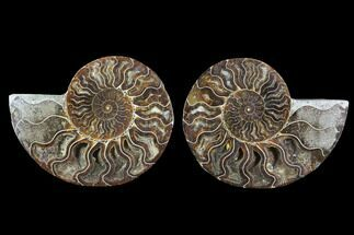 "Buy 5.1"" Cut & Polished Ammonite Fossil - Crystal Chambers - #91165"