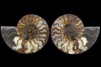 "6.15"" Cut & Polished Ammonite Fossil - Agatized For Sale, #91184"