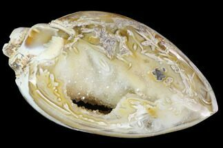 "1.70"" Chalcedony Replaced Gastropod With Druzy Quartz For Sale, #91822"