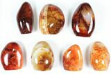 "Wholesale Lot: 3-4"" Cut Base Polished Carnelian - 7 pieces - #91535-1"