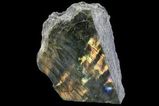 "Buy 5"" Wide, Single Side Polished Labradorite - Madagascar - #92017"