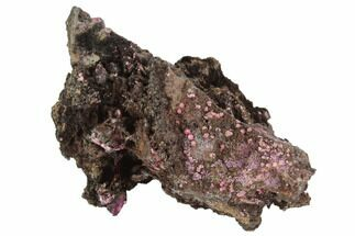"2.3"" Magenta Erythrite Crystals on Matrix - Morocco For Sale, #91766"