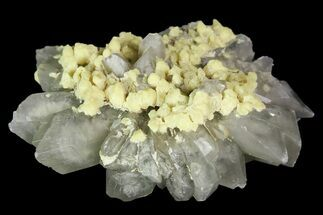 "Buy 2.4"" Sulfur Crystals on Selenite - Italy - #92617"