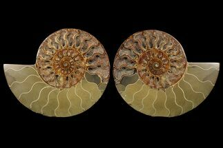 "Buy 7.5"" Cut & Polished Ammonite Fossil - Deep Crystal Pockets - #94201"