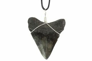 "2.5"" Fossil Megalodon Tooth Necklace For Sale, #95234"