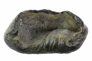 Whale (Unknown Species) - Fossils For Sale - #95730