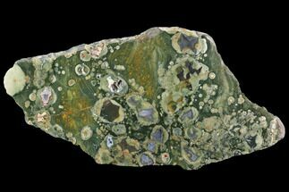 "Buy 7.6"" Polished Rhyolite (Rainforest Jasper) Section - Australia - #95902"