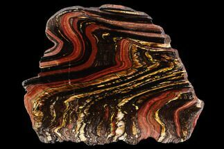 "Buy 6"" Polished Tiger Iron Stromatolite - (2.7 Billion Years) - #96229"