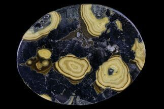"Buy 2.4"" Polished Schalenblende Cabochon - Poland - #96763"