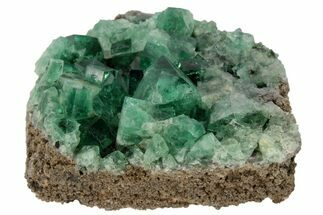 "Buy 2.1"" Highly Fluorescent, Green, Fluorite Cluster -  Rogerley Mine - #97879"
