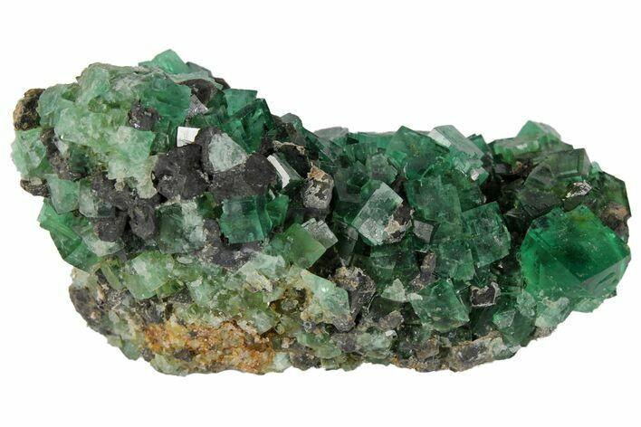 "2.9"" Fluorite and Galena Crystal Association -  Rogerley Mine"