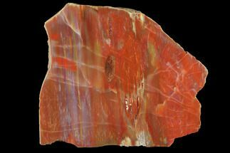 "4.6"" Wide, Polished Petrified Wood Section - Arizona For Sale, #98768"