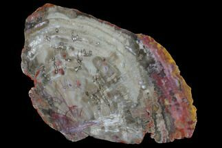 "9.6"" Wide, Polished Petrified Wood Slab - Arizona For Sale, #98774"