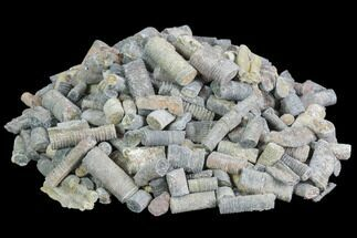 Buy Wholesale: 1 LB Fossil Crinoid Stems - About 300 Pieces - #99961