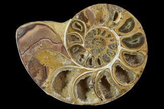 "Buy 3.5"" Sliced, Agatized Ammonite Fossil (Half) - Jurassic - #100549"
