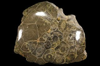 Hexagonaria sp. - Fossils For Sale - #100578